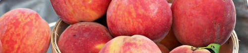 peaches banner plain_500x108