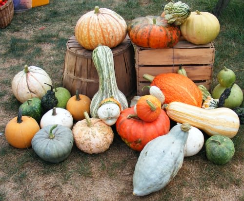 Winter Squash Tasting; Bucks County Foodshed Alliance
