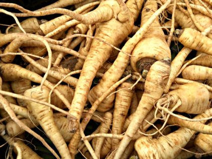 Parsnip_photo credit Lynne Goldman