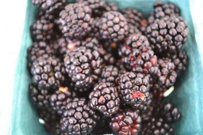 Blackberries, Peace Valley Winery