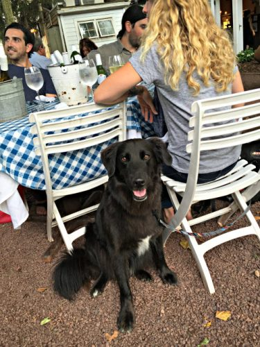 Sierra at Hamilton's Grill Room