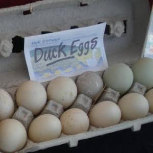 Duck Eggs, Doylestown Farmers Market