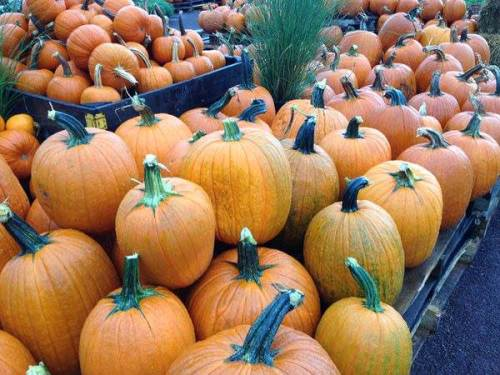 Shady Brook Farm Pumpkins