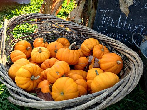 Pumpkins at Wrightstown Farmers Market; photo credit L. Goldman