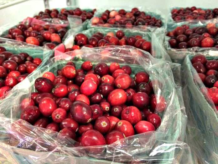 Cranberries, Manoff Market