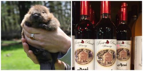 Aark wildlife animal and Rose Bank Winery wines