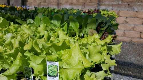 Lettuce Homestead Farm Market