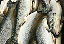 Fish at Indian Ridge Provisions_photo credit Lynne Goldman
