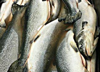 Fish at Indian Ridge Provisions_photo credit Lynne Goldman