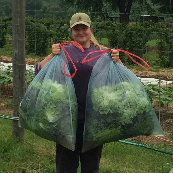 Becca at Tinicum CSA Farm holds lettuce for Rolling Harvest Food Rescue; photo credit Tinicum CSA