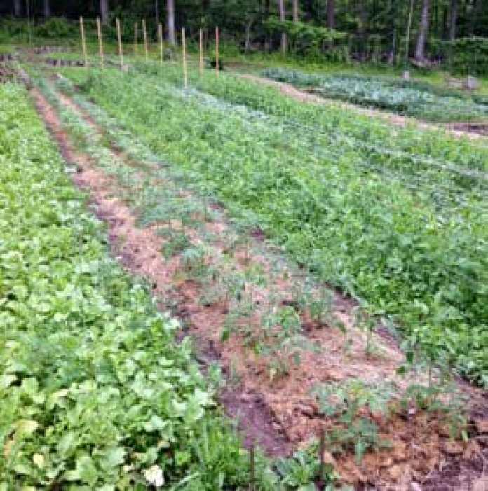 Locktown Farm field permaculture