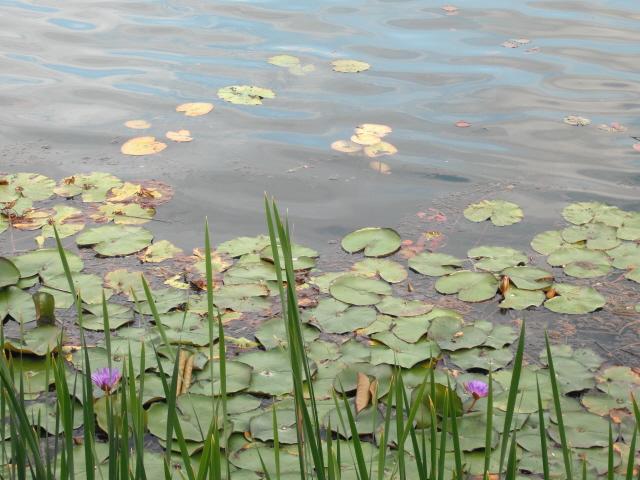 Ungheria termale  vacanza al Lago termale Heviz  wellness spa fittness