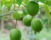 How to reduce your sugar intake with Buddha Fruit