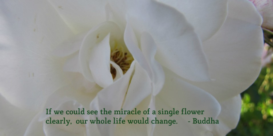 Miracle of a Single Flower - Buddha