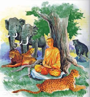 Image result for buddha and animals