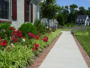 Plant Care and maintenance spring bed maintenance recommendations