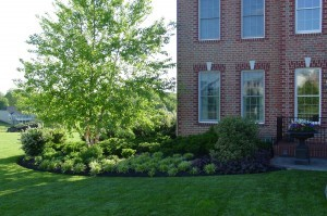 Budding Branch Landscape & Design offers Plant Care and Maintenance to Howard County, Carroll County, Baltimore County, Frederick County, Anne Arundel County as well as Clarksville, Ellicott City, Glenwood, Glenelg, Cooksville, Fulton, Olney & Brookville