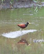 Bird near water