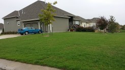 Lawn 4 weeks after a total renovation.