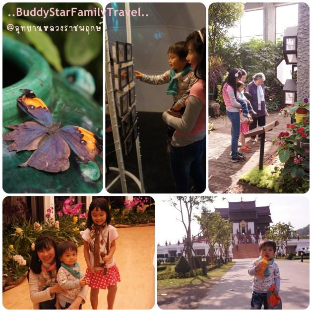 พาลูกเที่ยวเชียงใหม่,พาครอบครัวเที่ยวเชียงใหม่,พาลูกเที่ยว,พาครอบครัวเที่ยว,เชียงใหม่,ที่เที่ยว,เด็ก,ราชพฤกษ์] bug world, ผีเสื้อ