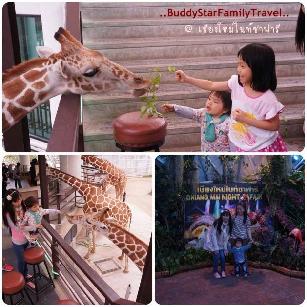 พาลูกเที่ยวเชียงใหม่,พาครอบครัวเที่ยวเชียงใหม่,พาลูกเที่ยว,พาครอบครัวเที่ยว,เชียงใหม่,ที่เที่ยว,เด็ก,เชียงใหม่ไนท์ซาฟารี