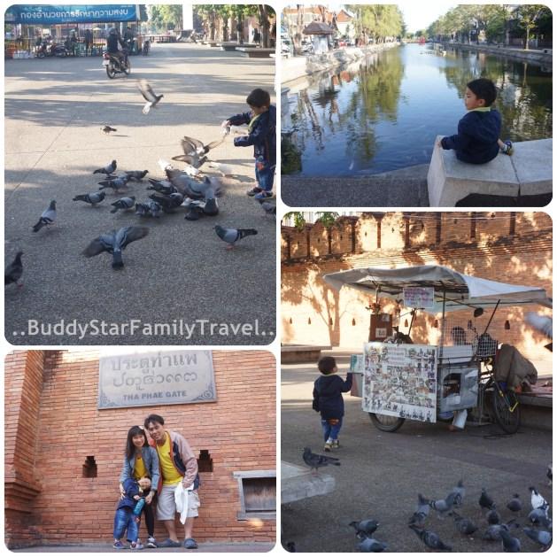 พาลูกเที่ยว,เชียงใหม่,เด็ก,ให้อาหาร,นก,ปลา,ท่าแพ