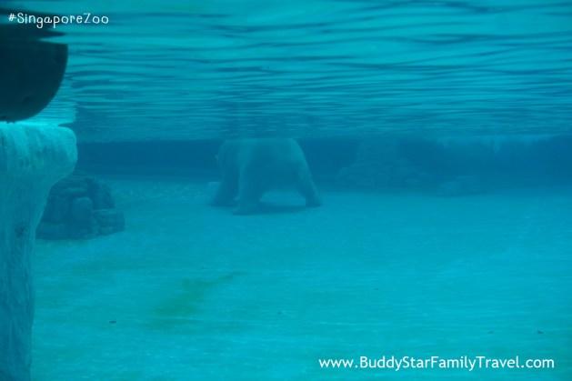 singapore zoo, สวนสัตว์สิงคโปร์, เด็ก, ที่เที่ยว, พาลูกเที่ยว, สิงคโปร์,