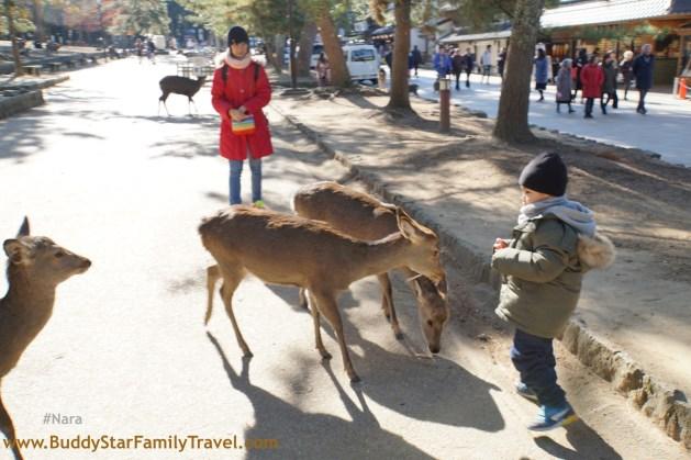 นั่งรถไฟเที่ยวญีปุ่น,นารา,เมืองกวาง,เด็ก,เที่ยวญี่ปุ่นเอง