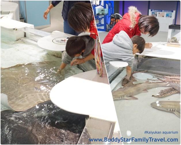 พาลูกเที่ยวโอซาก้า, ที่เที่ยว, เด็ก, โอซาก้า, ไคยูกัง, อควาเรียม