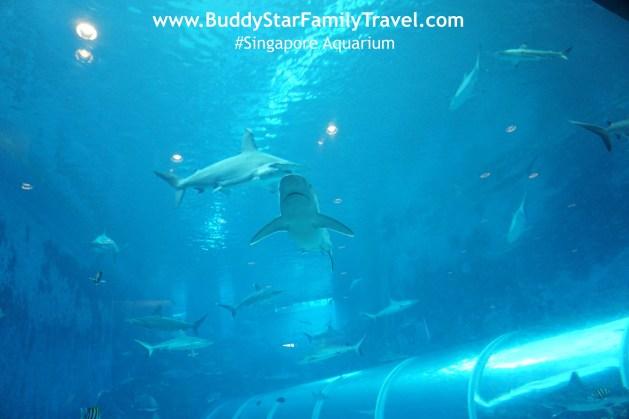 พาลูกเที่ยวสิงคโปร์,ที่เที่ยวเด็กสิงคโปร์,พาลูกเที่ยวต่างประเทศ,ด้วยตัวเอง,พิพิธภัณฑ์สัตว์น้ำสิงคโปร์, aquarium