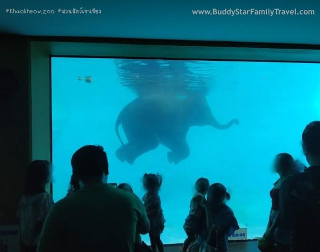 สวนสัตว์เขาเขียว, ช้างว่ายน้ำ, ช้างเล่นน้ำ, เขาเขียว, รีวิว, เด็ก