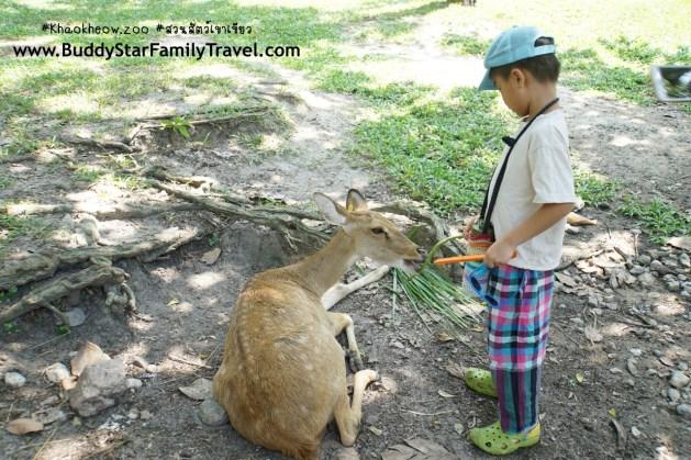 ให้อาหารกวาง, สวนสัตว์เขาเขียว, รีวิว, เด็ก