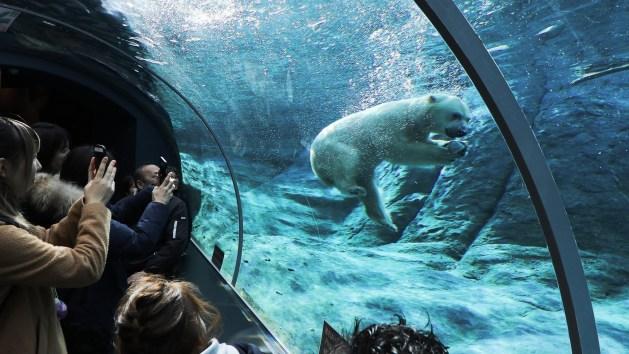 พาลูกเที่ยวฮอกไกโด, ซัปโปโร, กิจกรรม, เด็ก, maruyama zoo