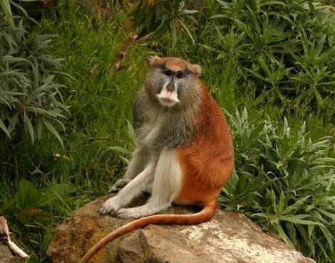 Monkey Mondays