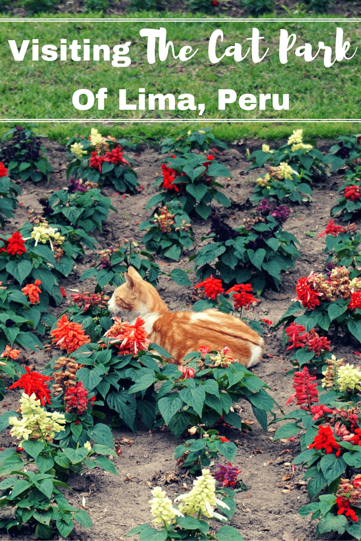 Parque Kennedy in the Miraflores district of Lima, Peru is also known as the Cat Park of Lima because it is home to over 100 stray cats. Read our post to get to know the history of the park and how these cats are cared for daily.