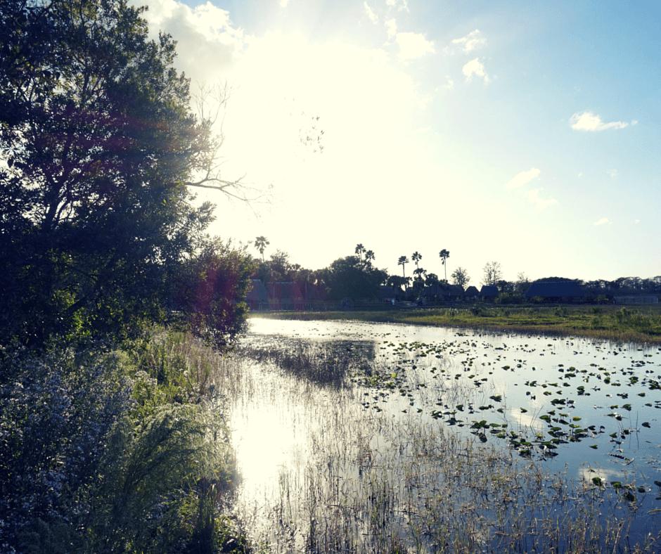 The view behind a chickee hut at Billie Swamp Safari