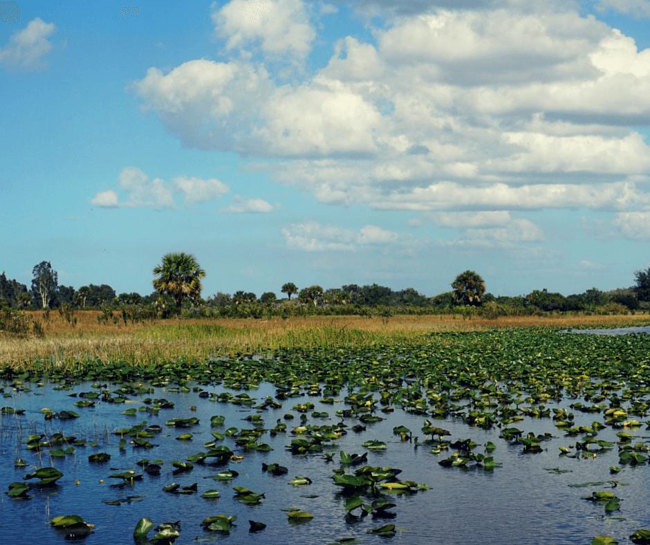 River of grass Billie Swamp Safari