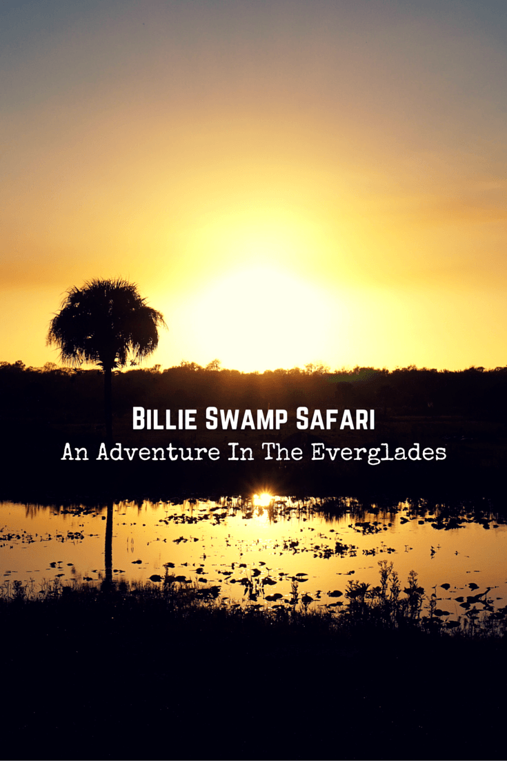Experience the real South Florida by going on an exciting adventure through the Everglades with Billie Swamp Safari.