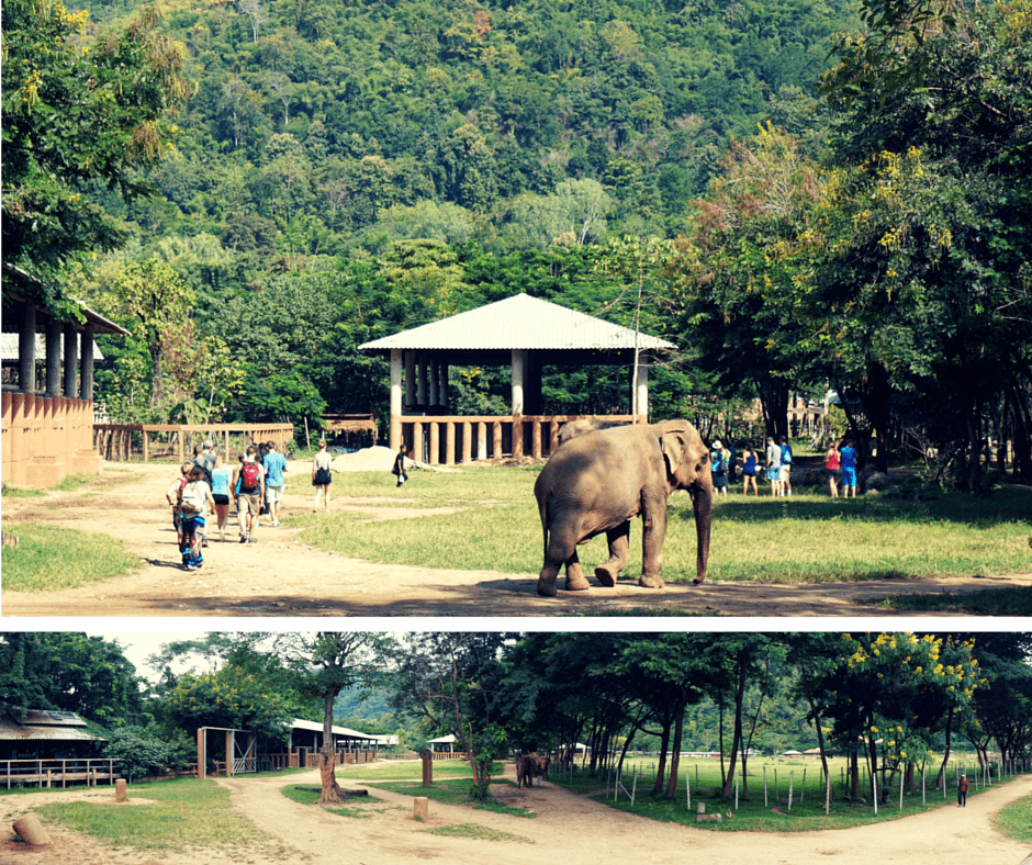 View of the grounds at Elephant Nature Park