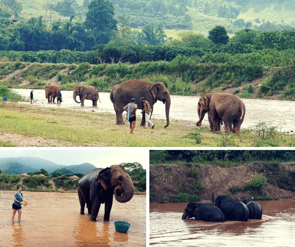 Giving the elephants a bath at Elephant Nature Park