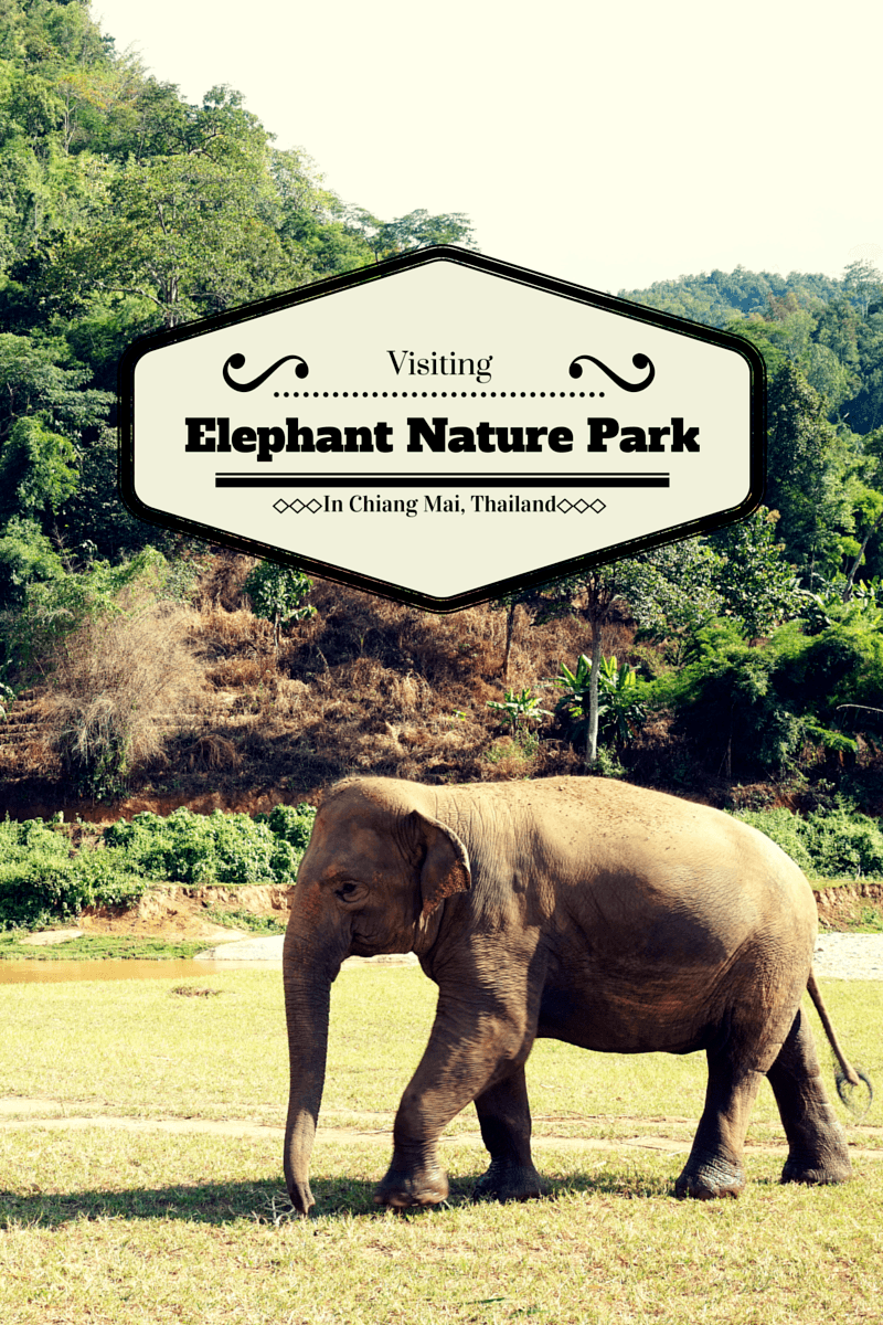 Experience elephants the right way by going to Elephant Nature Park in Chiang Mai, Thailand. It's a fun, educational, and amazing experience.