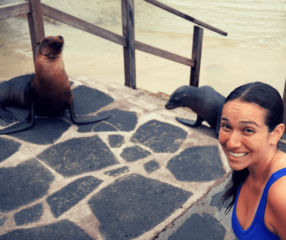 Sea Lions by the water in the Galapagos