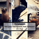 The Galapagos: Sea Lions And Iguanas And Tortoises! Oh My!