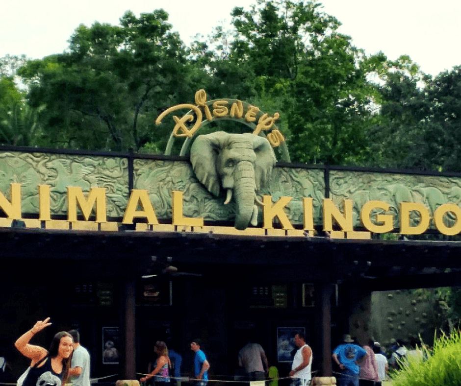 Buddy The Traveling Monkey Animal Kingdom