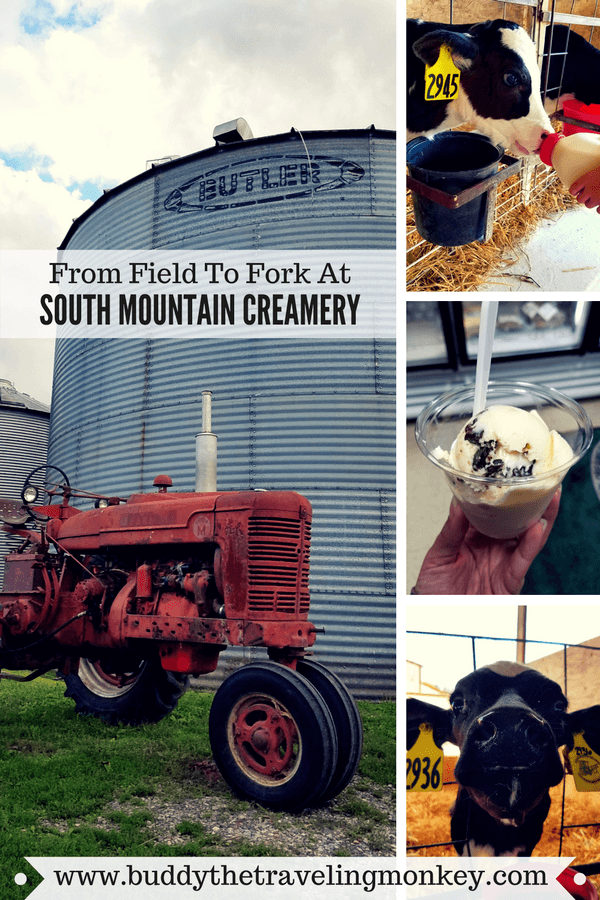 At South Mountain Creamery in Maryland, visitors can feed calves and have delicious ice cream and other products straight from the farm!
