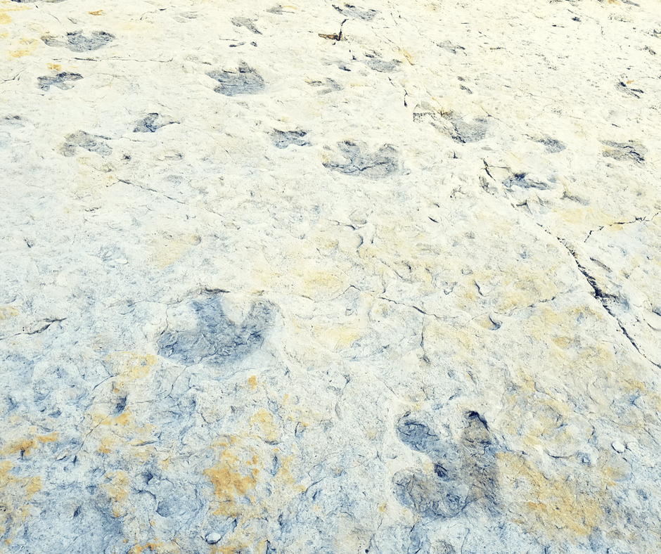 Dinosaur footprints at Dinosaur Ridge Colorado