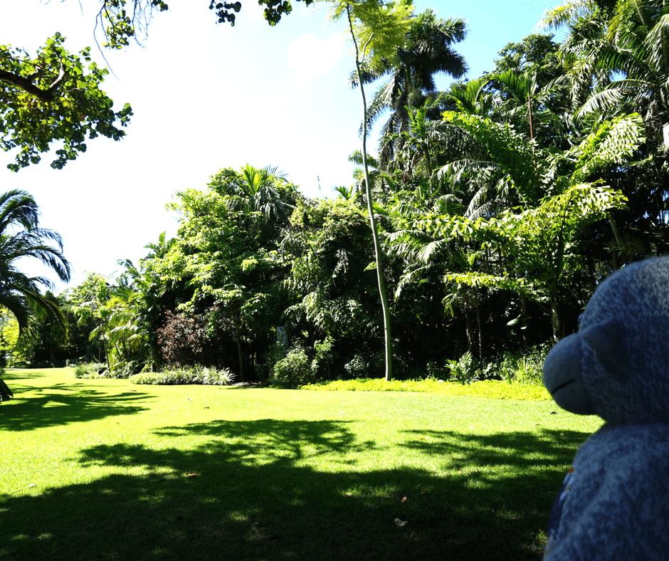 great lawn of Miami Beach Botanical Garden