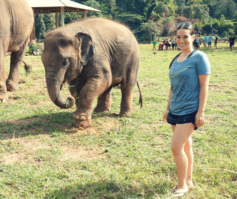 Baby elephant at Elephant Nature Park