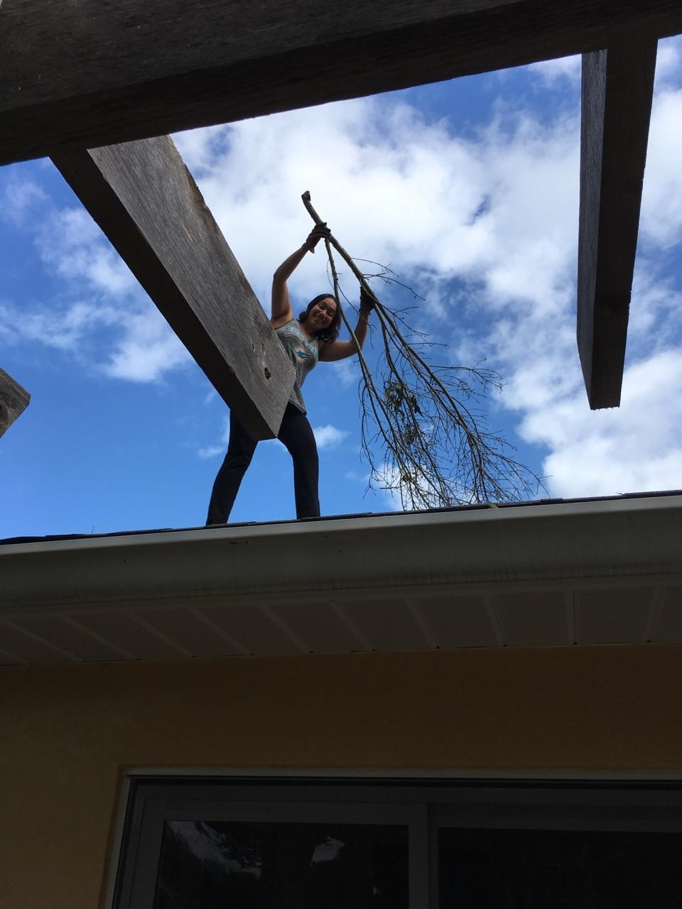 Pulling branches off the roof after Hurricane Irma