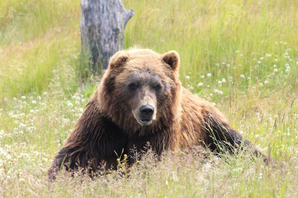 Canadian Family Vacations, bear watching